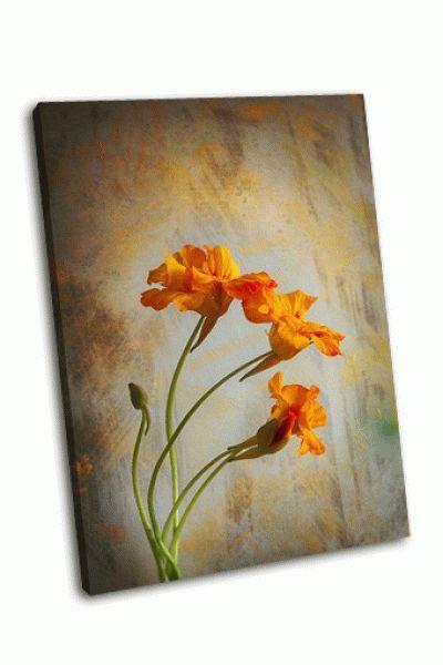 Картина три цветка настурции