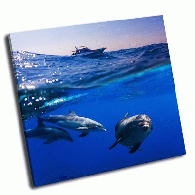 Картина три дельфина