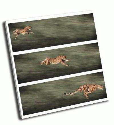Картина три гепарда