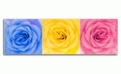 Картина три многоцветные розы