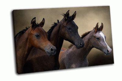 Картина три молодых лошади