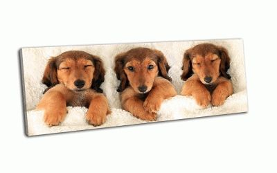 Картина три щенка в постели