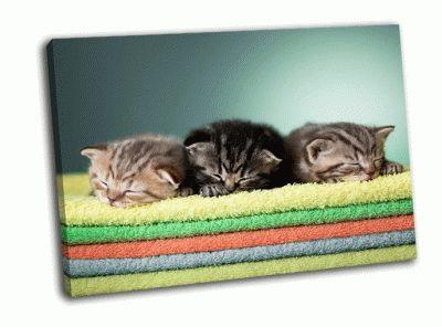 Картина три шотландских котенка