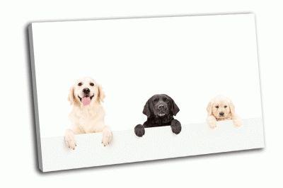 Картина три собаки на белом фоне