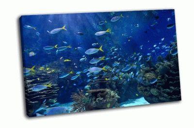 Картина тропические рыбы