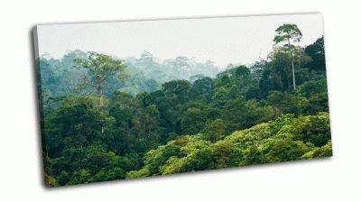 Картина тропический лес в национальном парке кхао яй