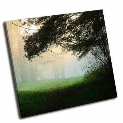 Картина туман в лесу