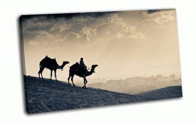 Картина верблюд