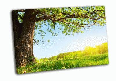 Картина весенний луг с большым деревом