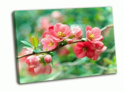 Картина ветка весенних цветов