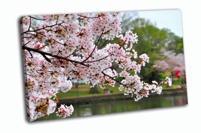 Картина ветка вишни в парке