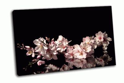 Картина ветвь цветущего миндаля на черном фоне