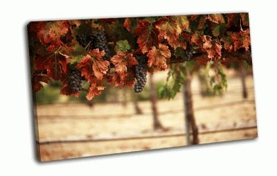 Картина виноградник