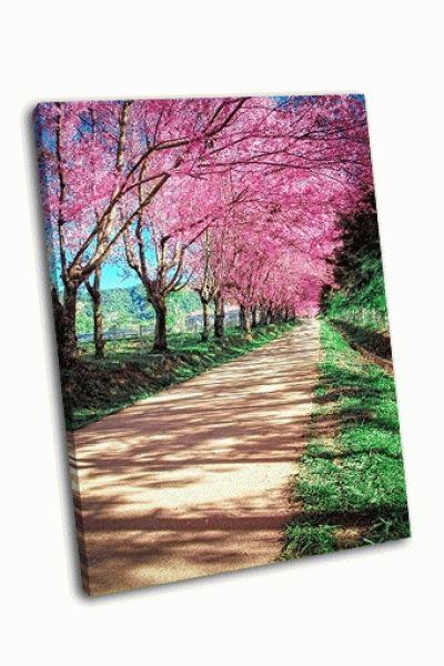 Картина вишни в чиангмай, таиланд