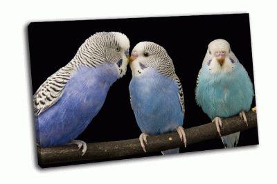 Картина волнистые попугайчики