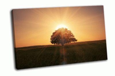 Картина волшебный  восход из-за дерева