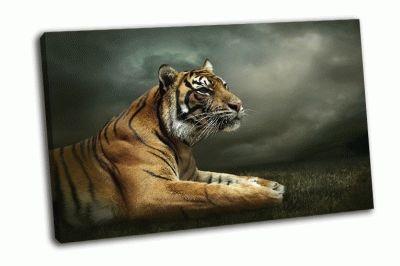 Картина взгляд тигра