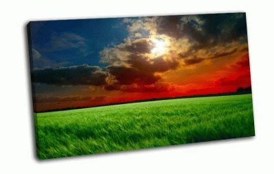 Картина закат, колосья зеленые