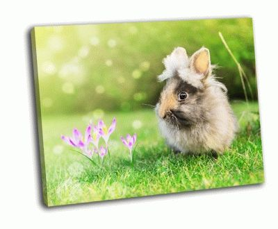 Картина заяц в саду на траве