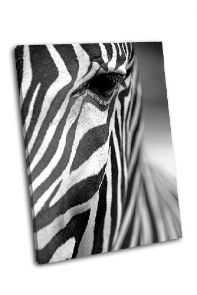Картина зебра греви крупным планом