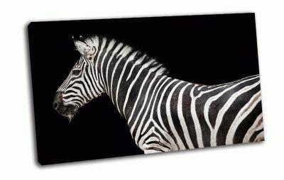 Картина зебра на черном фоне