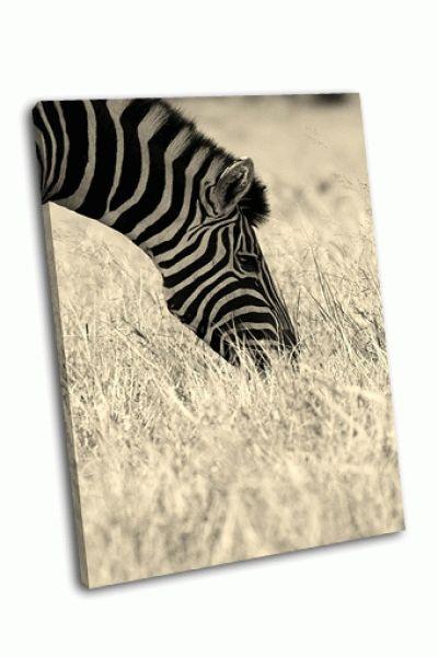 Картина зебра в поле