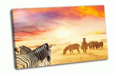 Картина зебры на закате
