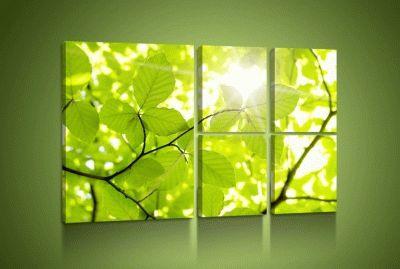 Картина зеленая ветка