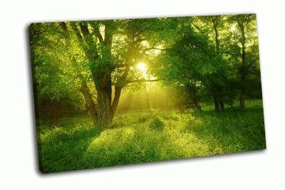 Картина зеленый туманный лес