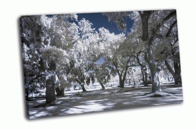 Картина зимний парк