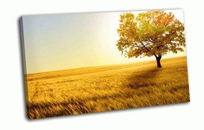 Картина золотая пшеница