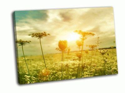 Картина золотой вечер на летнем лугу