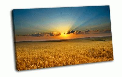Картина золотые колосья