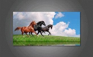 Бег красивых лошадей