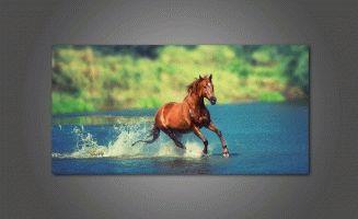 Бег лошади в речке