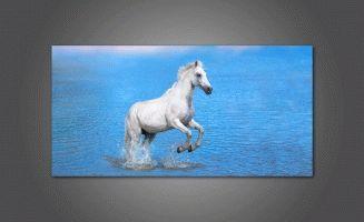 Белая лошадь в воде
