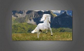 Белая лошадка в поле