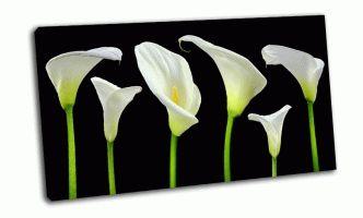 Белые каллы на черном фоне