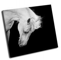 Белый конь на черном фоне