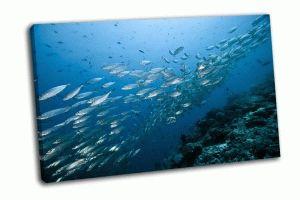 Цезиевые рыбы в море