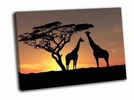 Два жирафа на восходе солнца