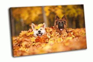 Две собаки в листьях
