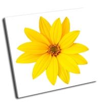 Желтый цветок на белом фоне