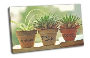 Горшочки с растениями