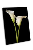 Калла Лили на черном фоне