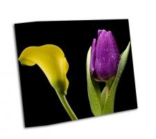 Калла Лилии и фиолетовый тюльпан