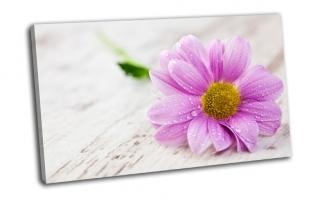 Капли воды на цветке