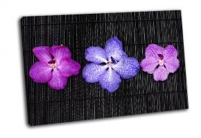 Композиция из разноцветных орхидей