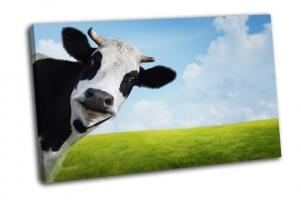 Корова на зеленом летнем лугу