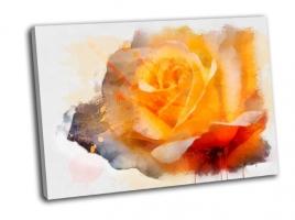 Красивая оранжевая роза